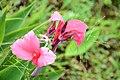 Pink Flowers (46557882274).jpg