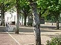 Place de Dame Marie 2.JPG