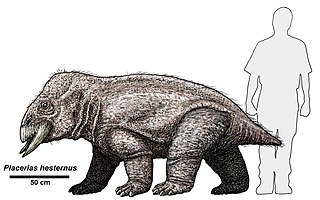 Drawing of P. hesternus compared to human in size