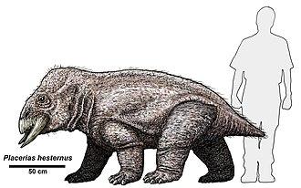 Placerias - P. hesternus compared to a human