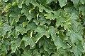 Plant 9960.jpg