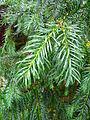 Plant beauty in winter 001.JPG
