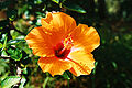 Plants-Sicily-bjs-2.jpg