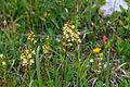 Plants from Passo Pordoi 3.jpg