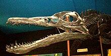 [Image: 220px-Pliosaurus_ferox.JPG]