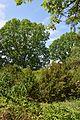 Plodove Novokahovka's Arboretum 46 (YDS 1170).jpg