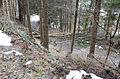 Poertschach Forstweg zur Poertschacher Alm 03032014 447.jpg