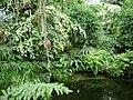 Poland. Warsaw. Powsin. Botanical Garden 155.jpg