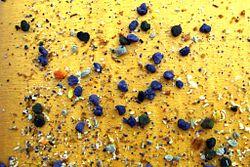 pollen phacelia bees