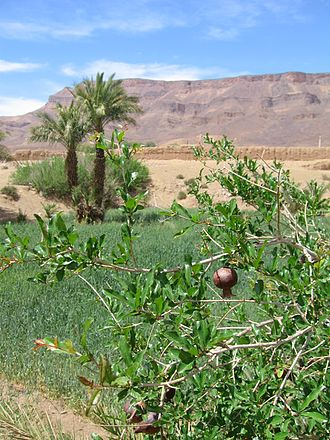 Draa River - The Draa river supports light agriculture, including the cultivation of pomegranates and dates.