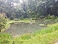 Pond View 20170706 160350.jpg