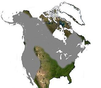 North American porcupine - Image: Porcupine North America Range
