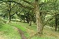 Porlock, footpath in Homebush Wood - geograph.org.uk - 221394.jpg