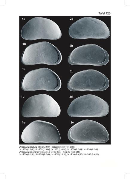 File:Potamocypris fulva.pdf