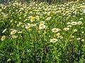 Primavera na Arriba. 01.jpg