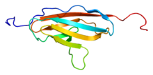 Protein MYBPC1 PDB 1x44.png