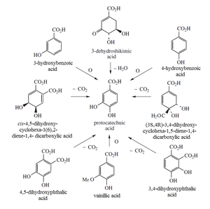 Protocatechuic acid - Protocatechuic acid biosynthesis