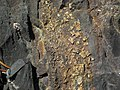 Pyrite crystals in banded iron formation (Temagami Iron-Formation, Neoarchean, ~2.736 Ga; Temagami North roadcut, Temagami, Ontario, Canada) 16 (47018894634).jpg