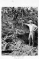 Queensland State Archives 4304 Tree stump removed at the Childers Soldiers Settlement 1950.png