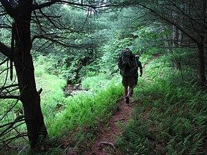 Quehanna Trail System - Image: Quehanna Trail 1