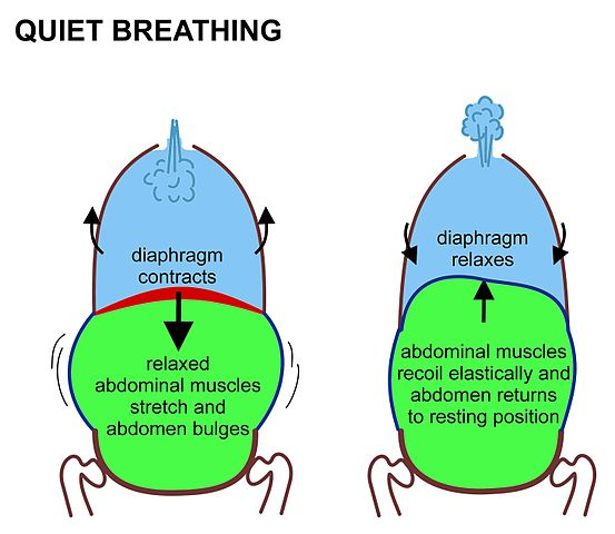 Quiet breathing