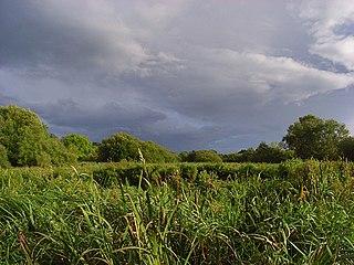 Rack Marsh