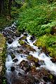 Rapids near Wahkeena Falls (Multnomah County, Oregon scenic images) (mulDA0040c).jpg