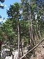 Raymondskill Falls - Pennsylvania (5677475401).jpg