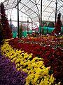 Republic day Flower Show at Lalbhag.jpg