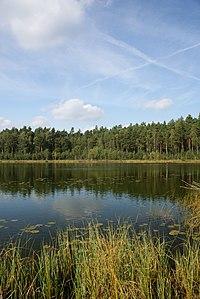 Rezerwat przyrody Jezioro Martwe 1.JPG