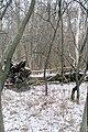 Rezerwat przyrody Kręcki Łęg-zima.jpg