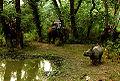 Rhinos leofleck.jpg