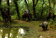Elephant safari after the Indian Rhinoceros in Royal Chitwan National Park, Nepal (photographed by Leonardo C. Fleck)