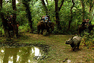 Chitwan District - Elephant safari after an Indian rhinoceros