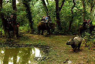 Indian rhinoceros - Elephant safari after Rhinoceros unicornis in Chitwan National Park