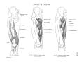 Richer - Anatomie artistique, 2 p. 70.png