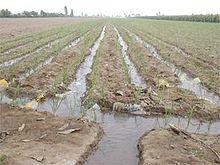 Irrigatie wikipedia for Vivero definicion
