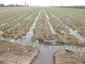 Irrigation statistics - Furrow irrigation