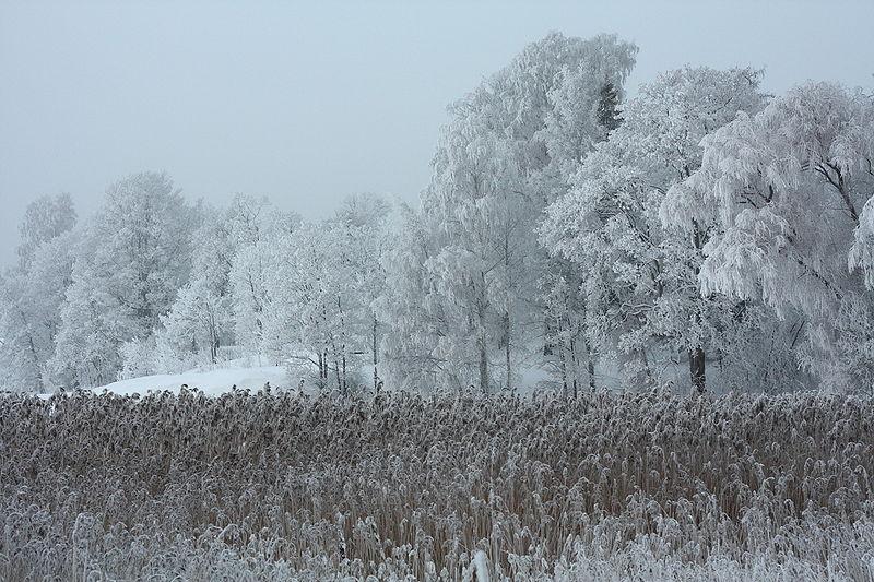 File:Rime in Lapinlahti Helsinki 1.JPG