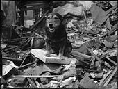 A dog standing in the remains of a destroyed building