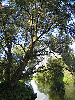 River Great Ouse at Little Paxton.jpg