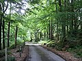 Road through the forest - geograph.org.uk - 513293.jpg