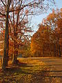 Roadway in David Crockett State Park (Autumn 2008 - Vertical Image).jpg