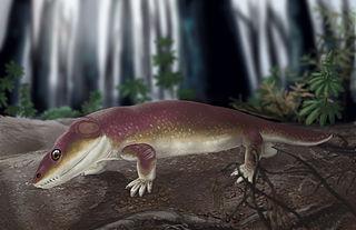 <i>Rotaryus</i> genus of amphibians (fossil)