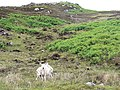 Rough grazing for sheep on Carn na h-Uamhaig - geograph.org.uk - 494640.jpg
