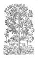 Roze fig.30 à 33.png