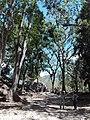 Ruinas MAYA Copan Honduras 07.jpg