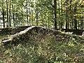Ruine Sola am Bürgli im Oktober 2020.jpg