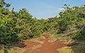 SL Ussangoda NP asv2020-01 img02.jpg