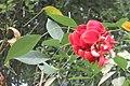SZ 深圳 Shenzhen 蛇口 Shekou Nanshan 四海公園 Sihai Park green plant leaves red flower Oct 2017 IX1 02.jpg